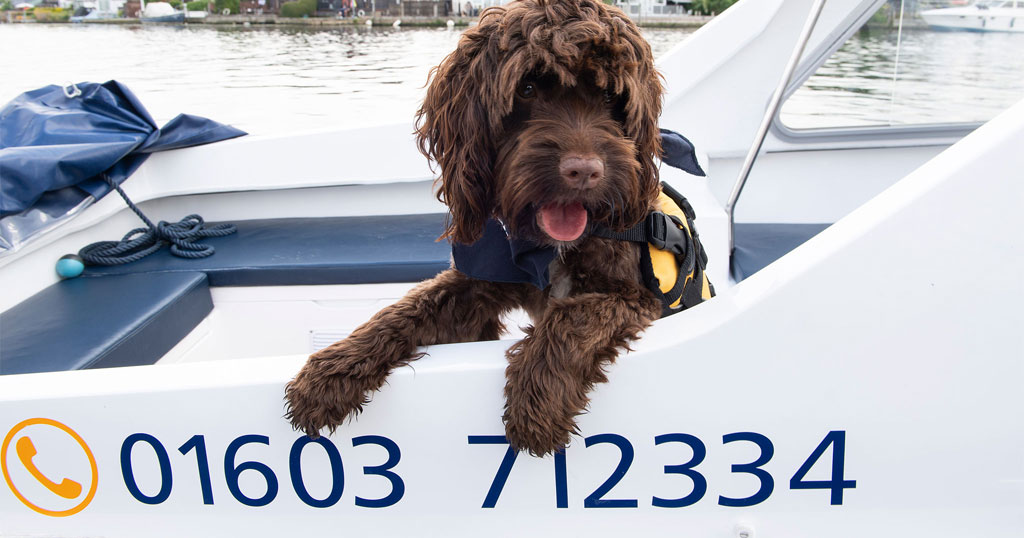 Dog on a day boat for hire